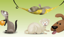 Ferret Dream